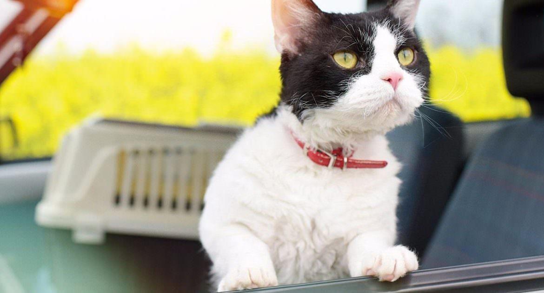 【影評】《旅貓日記》開年最感人的貓咪電影。